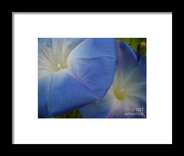 Flower Framed Print featuring the photograph Soft Morning Glory by Chad Natti
