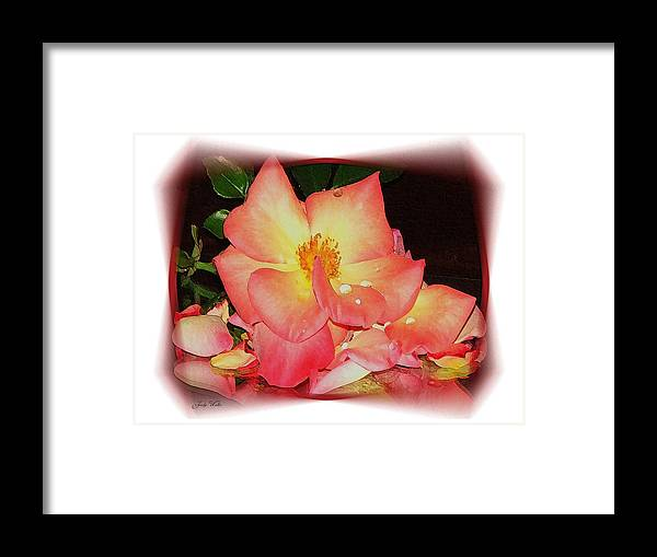 Pink Framed Print featuring the photograph Soft Pink Rose by Judy Waller
