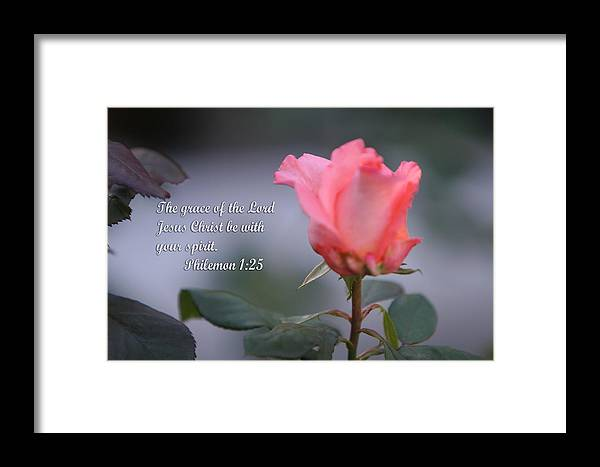 Scripture Framed Print featuring the photograph Soft Pink Rose With Scripture by Linda Phelps