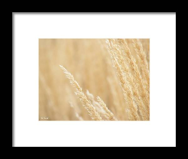 Soft Touch Framed Print featuring the photograph Soft Touch by Ed Smith