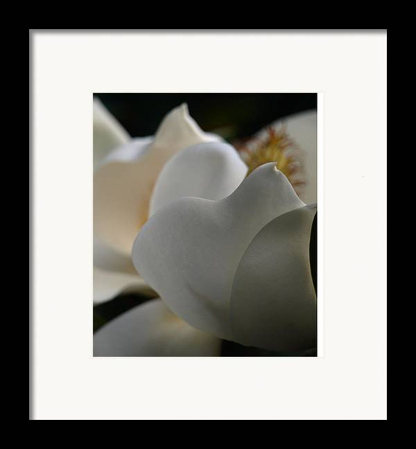Magnolia Framed Print featuring the photograph Soft White by Kim