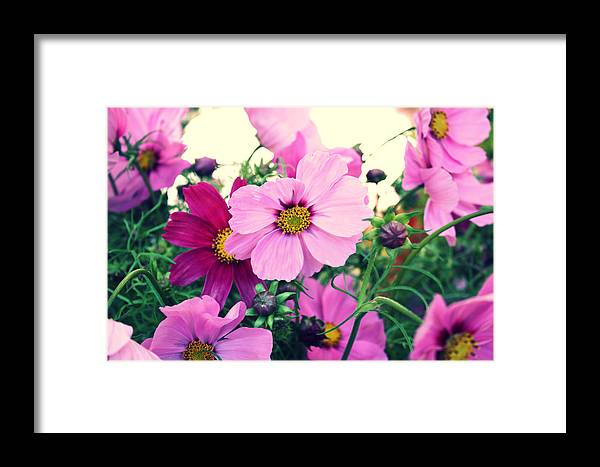 Flowers Framed Print featuring the photograph Softly Blowing by Cathie Tyler