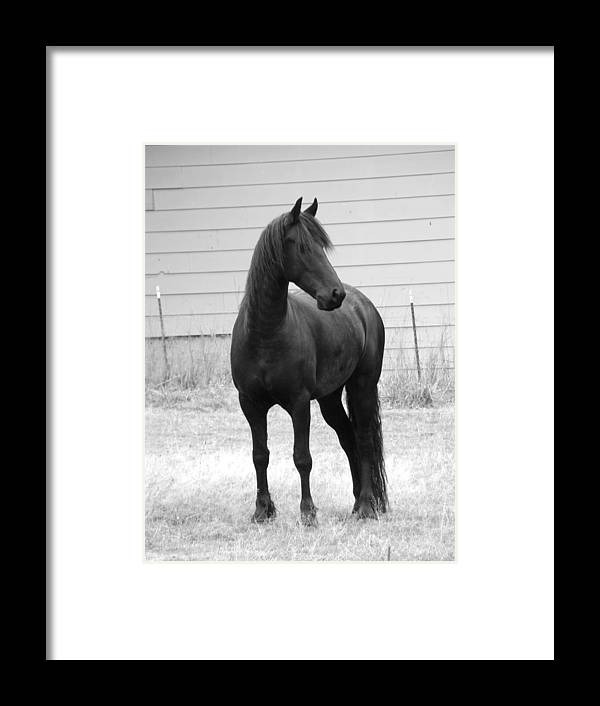 Horse Cards Framed Print featuring the photograph Solana Rue by Lisa Rose Musselwhite