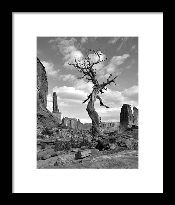 Arches Framed Print featuring the photograph Solitary Park Avenue Tree - Bw by Lynn Kim