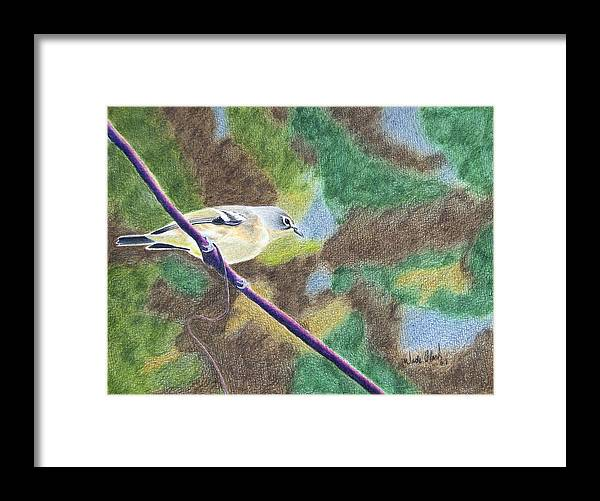 Birds Framed Print featuring the painting Solitary vireo by Wade Clark