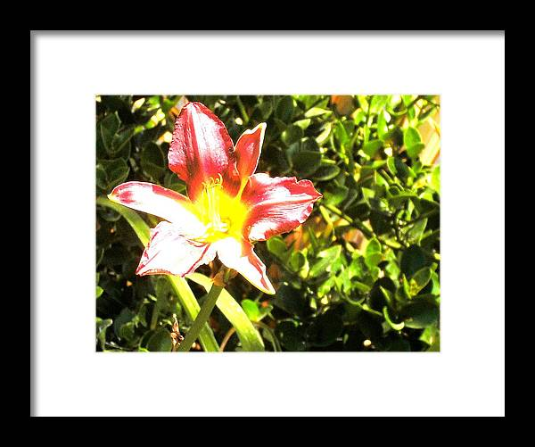 Flower Framed Print featuring the photograph Solitude by Cleautrice Smith