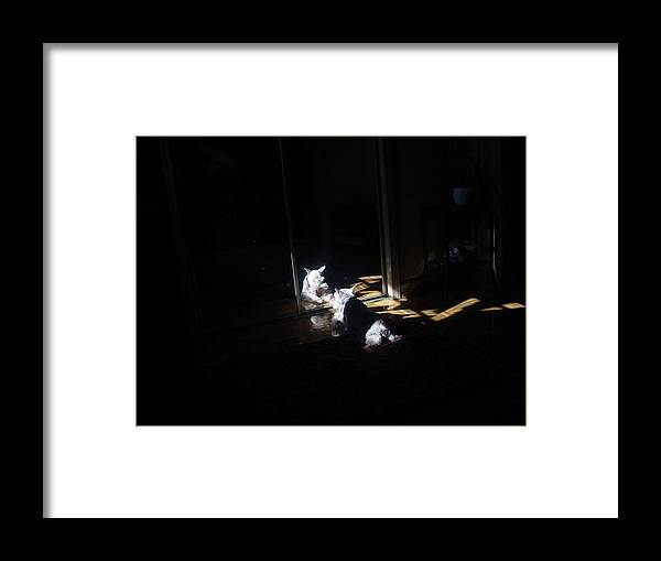 Dog (schnauzer) Framed Print featuring the photograph Solitude by Dale Augustson