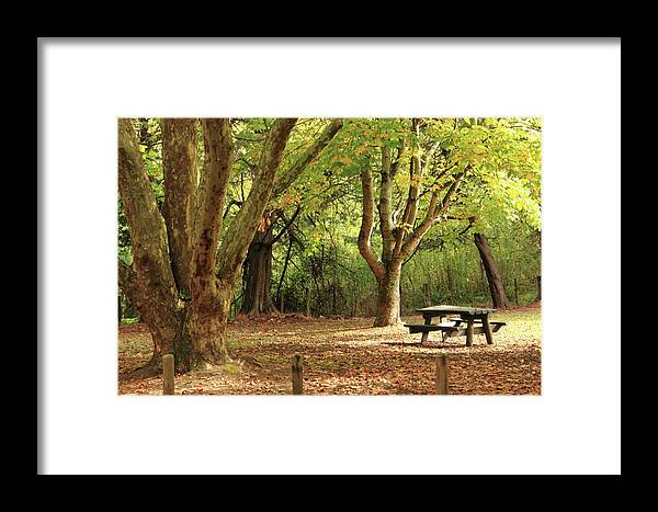 Park Framed Print featuring the photograph Solitude by Elayne Hand