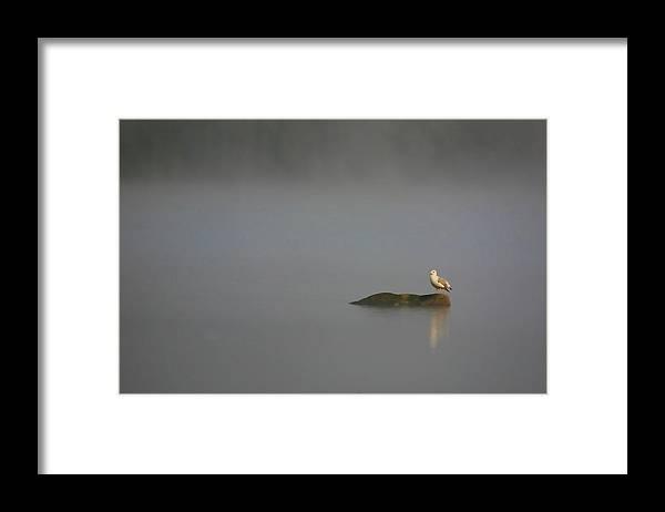 Water Pond Seagull Bird Feathers Tern Photograph Photography Digital Art Fine Art Framed Print featuring the photograph Solitude by Shari Jardina