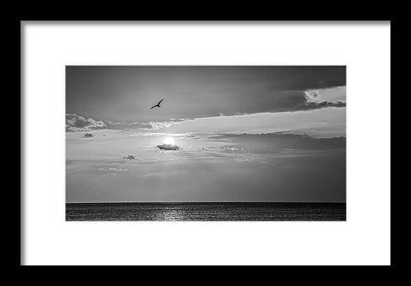 Florida Framed Print featuring the photograph Solo Flight Bw by Penny Meyers