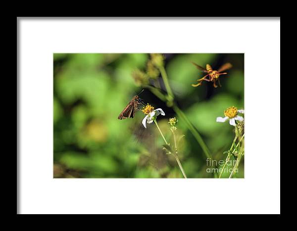Some Kind Of Skipper Framed Print featuring the photograph Some Kind Of Skipper by William Tasker