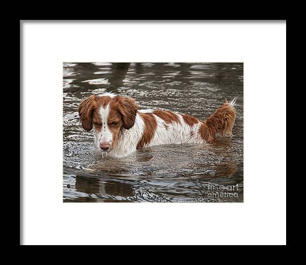 Debbie Flanigan Framed Print featuring the photograph Something Under The Water by Timothy Flanigan and Debbie Flanigan at Nature Exposure