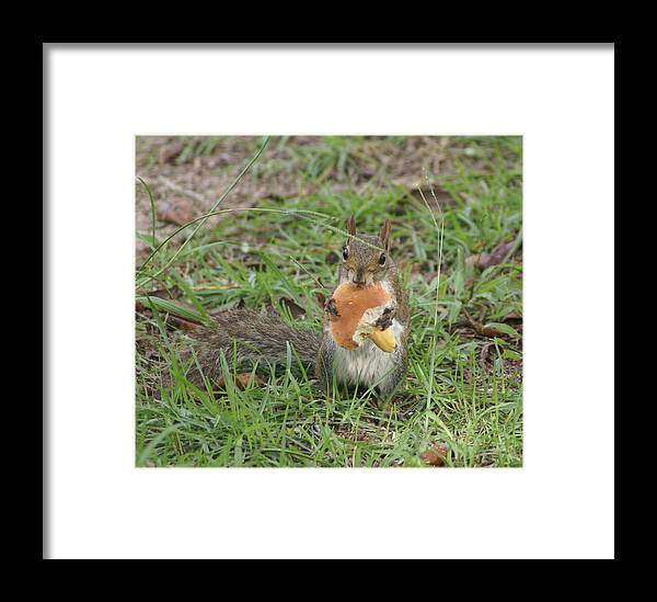 Squirrel Framed Print featuring the painting Sometimes I Feel Like A Nut by Debbie May