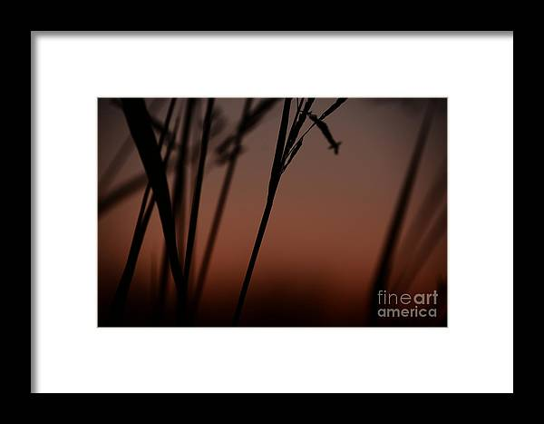 Somewhere Out There Framed Print featuring the photograph Somewhere Out There by Maria Urso