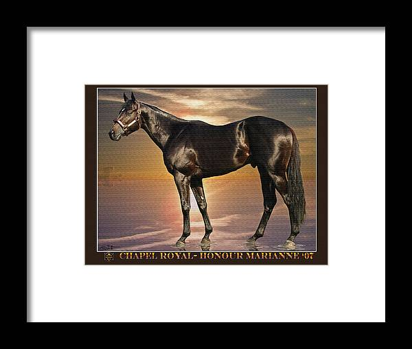Race Horse Thoroughbred Colt Framed Print featuring the painting Son Of Chapel Royal-honour Marianne'07 by John Breen