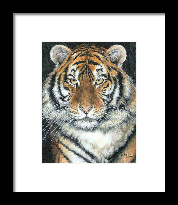 Tiger Framed Print featuring the drawing Songha by Carla Kurt