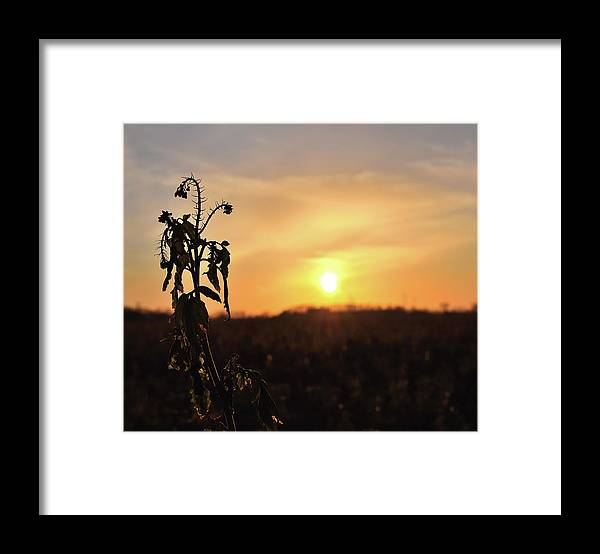 Sonnenuntergang Blume Flowwer Sky Himmel Framed Print featuring the photograph Sonnenuntergang by Scimitarable