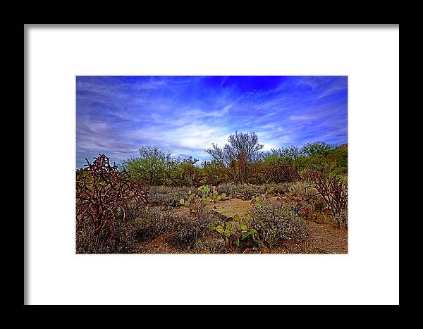 Sonoran Desert Framed Print featuring the photograph Sonoran Desert H1819 by Mark Myhaver