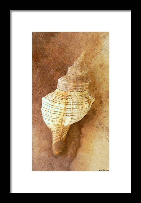 Still Life Framed Print featuring the photograph Sounds Of The Sea by Holly Kempe