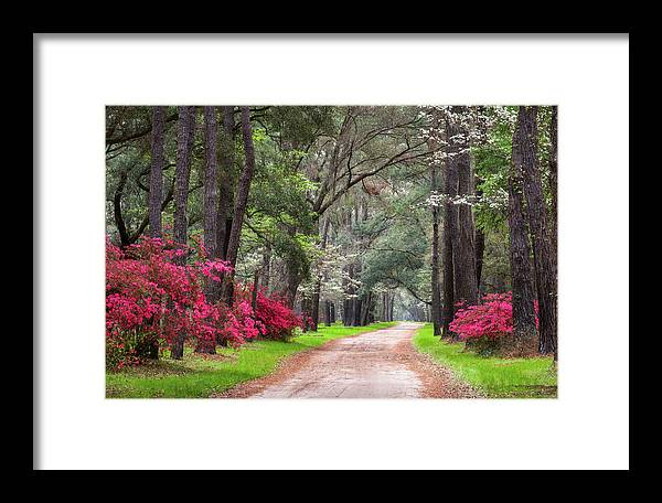 Charleston Framed Print featuring the photograph South Carolina Lowcountry Spring Flowers Dirt Road Edisto Island Sc by Dave Allen