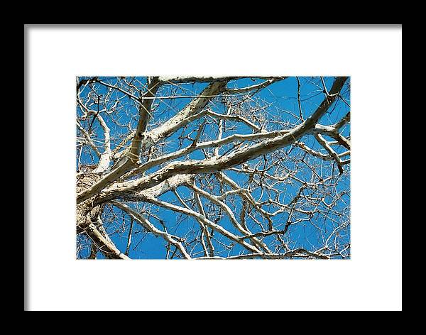 Tree Framed Print featuring the photograph Space Dream by Jennifer Trone