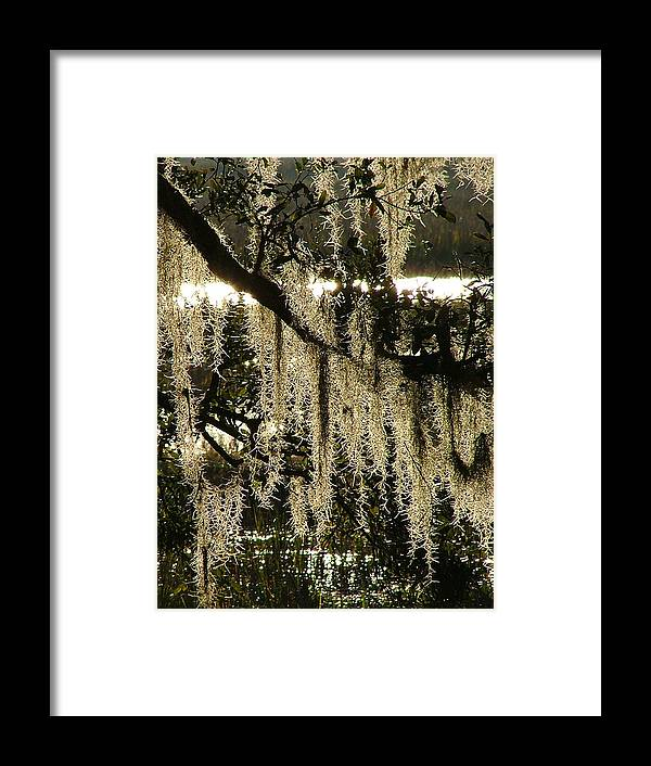 Marsh Framed Print featuring the photograph Spanish Moss by Donna Thomas