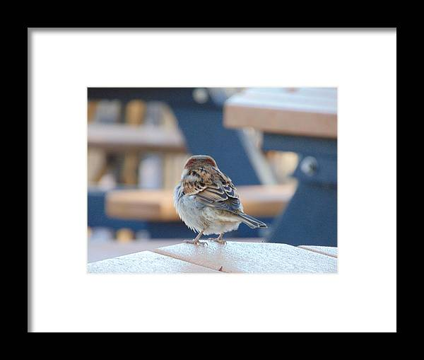 Sparrow Framed Print featuring the photograph Sparrow by Karen Capehart