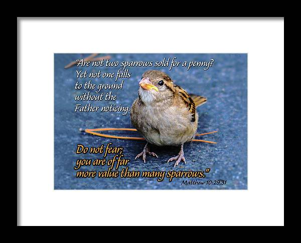 Sparrow Scripture Matthew 10 Framed Print By Brian Tada