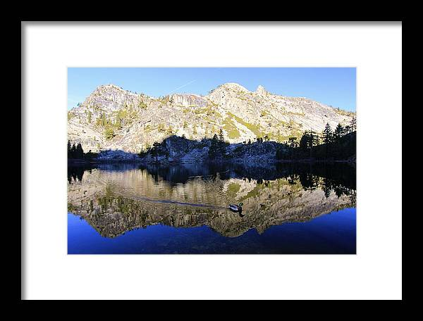 Lake Tahoe Framed Print featuring the photograph Speak Up For All Wildlife by Sean Sarsfield