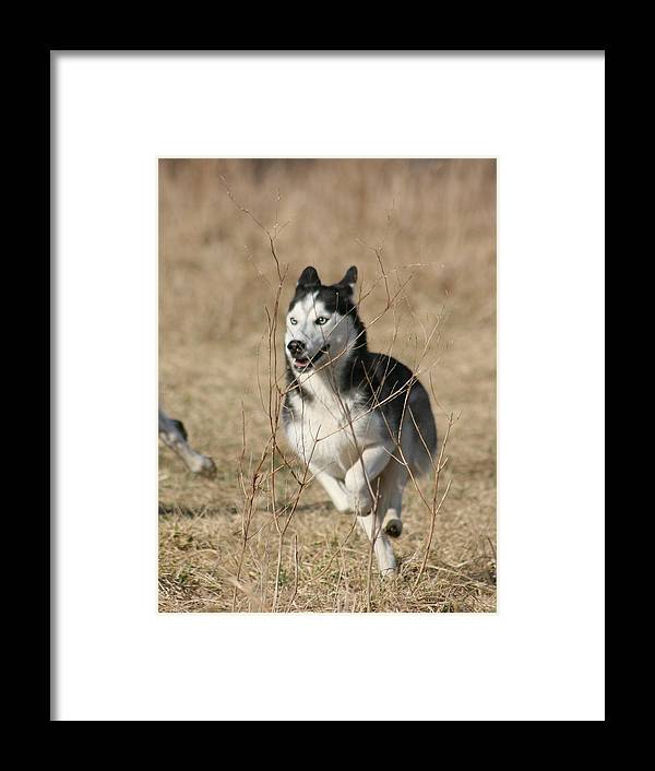 Animal Framed Print featuring the photograph Speed Freak by David Dunham
