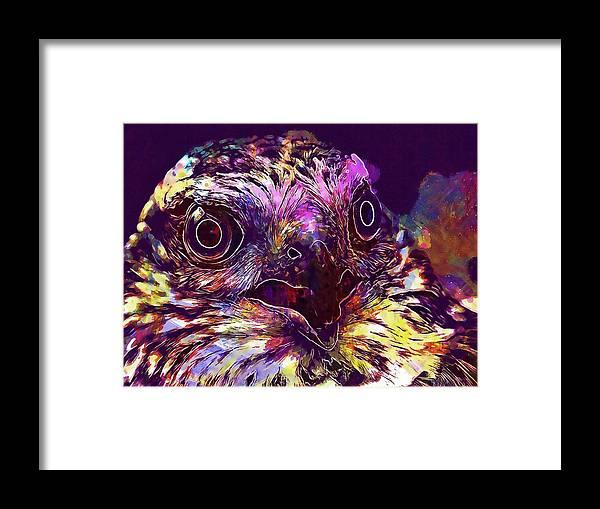 Sperber Framed Print featuring the digital art Sperber Raptor Plumage Bird Of Prey by PixBreak Art