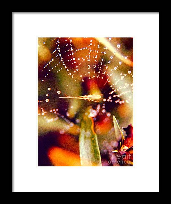 Spider Framed Print featuring the photograph Spider And Spider Web by Debra Lynch