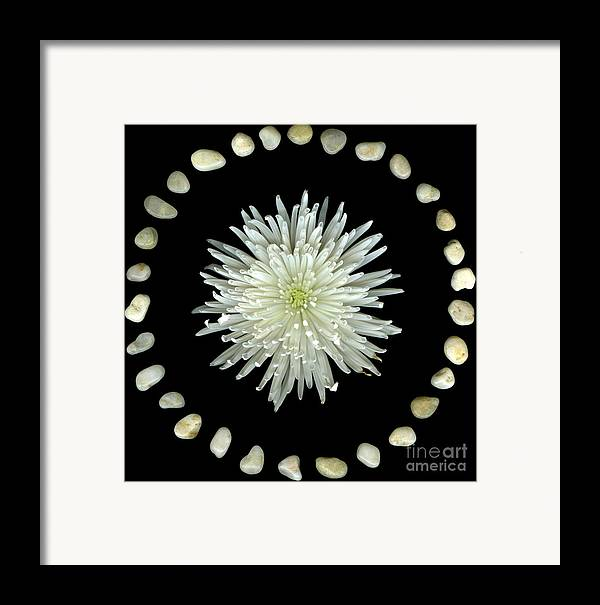 Scanography Framed Print featuring the photograph Spider And Stones by Christian Slanec
