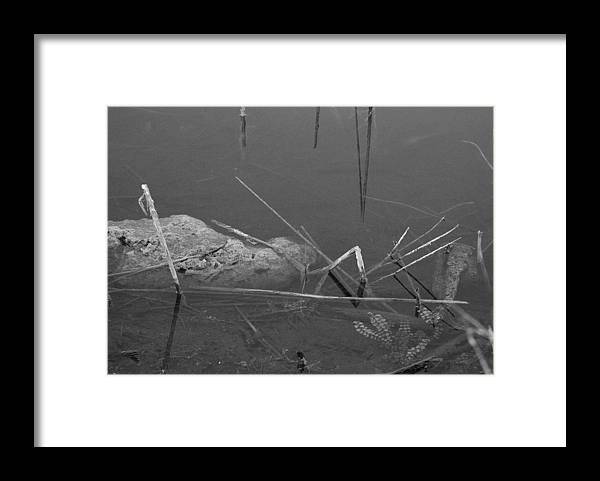 Black And White Framed Print featuring the photograph Spider In Water by Rob Hans