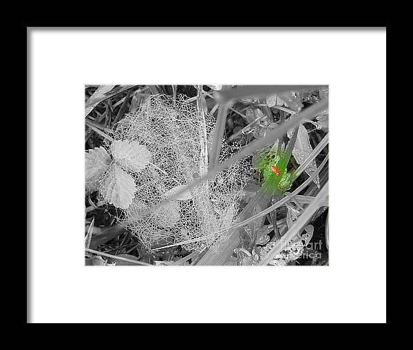 Spider Framed Print featuring the photograph Spider Web by Anita Goel