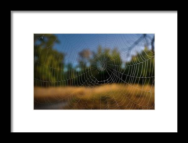 Cobweb Spiderweb Framed Print featuring the photograph Spiderpane Window by Kevin Felts