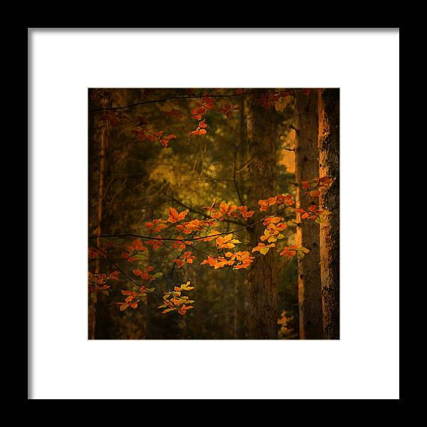 Autumn Framed Print featuring the photograph Spirit Fall by Philippe Sainte-Laudy