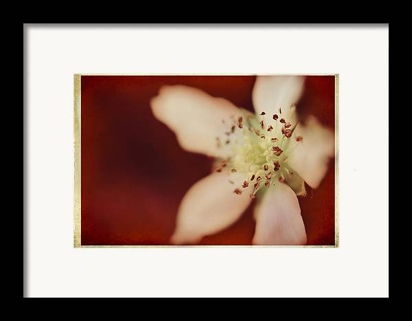 Macro Framed Print featuring the photograph Spirit by Laurie Search