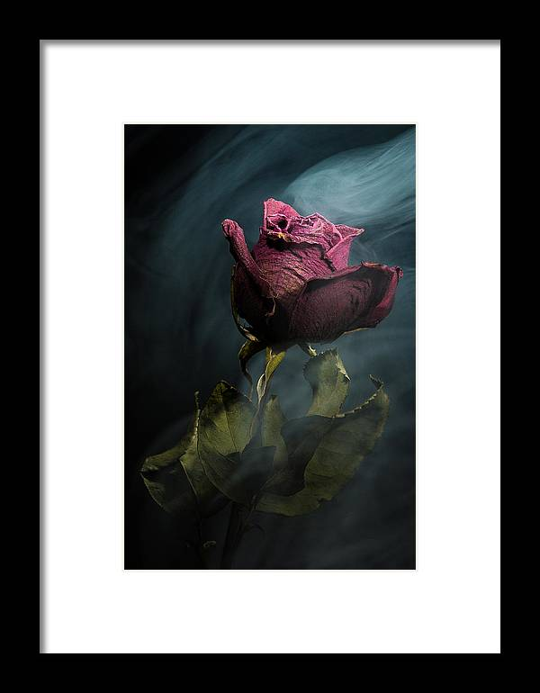 Rose Framed Print featuring the photograph Spirit Of A Dying Rose by Vincent Knaus