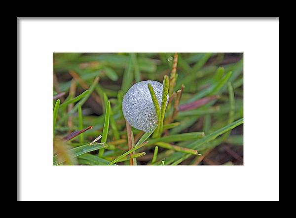 Insect Framed Print featuring the photograph Spittle Bug Case by Kenneth Albin