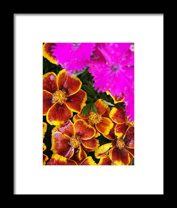 Flowers Framed Print featuring the photograph Splash Of Color by Vijay Sharon Govender