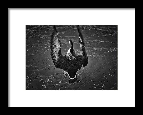 Photography Framed Print featuring the photograph Splash by Raven Steel Design