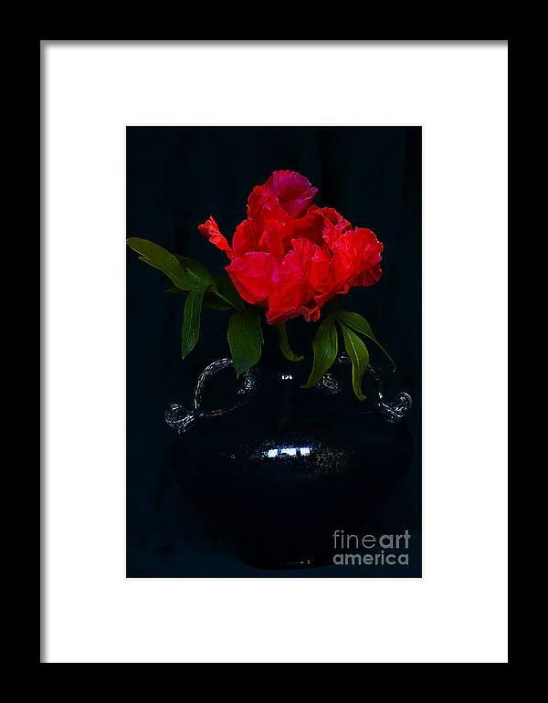 Peony Framed Print featuring the photograph Splendid Peony In Vase. by Alexander Vinogradov