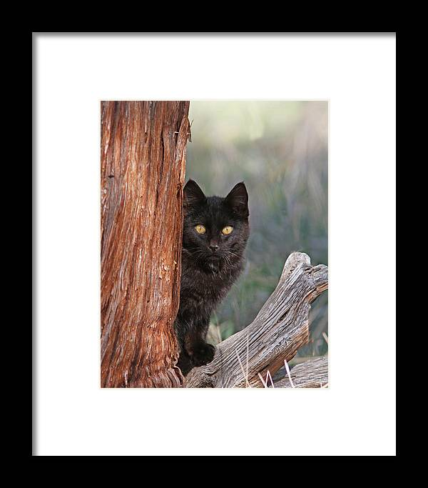 Spooky Framed Print featuring the photograph Spooky by Gary Wing