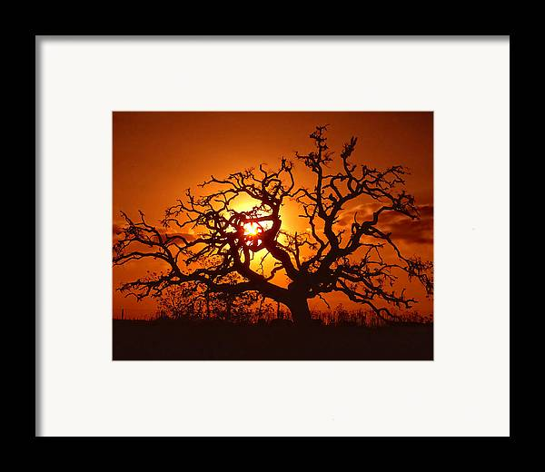 Spooky Framed Print featuring the photograph Spooky Tree by Stephen Anderson
