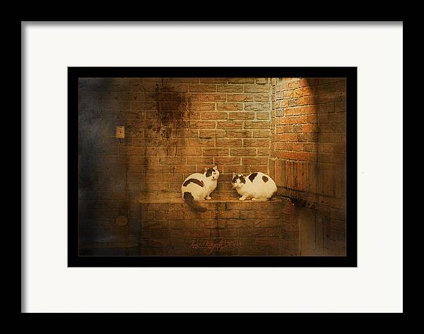 Cats Framed Print featuring the photograph Spotlight by Inesa Kayuta