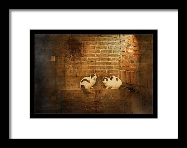 Cats Framed Print featuring the photograph Spotlight by Inesa Kayuta