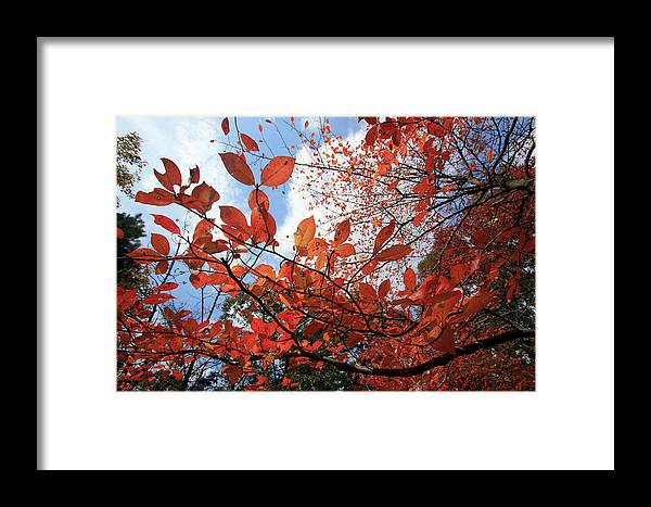 Trees Framed Print featuring the photograph Spreading Orange by Mary Haber