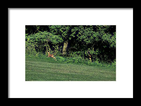 Apple Framed Print featuring the photograph Sprightly Spot by Jamart Photography