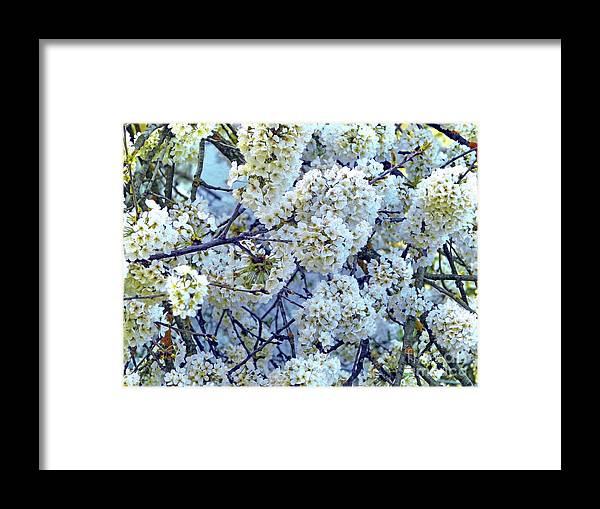 Floral Bouquet Framed Print featuring the photograph Spring Around by Jasna Dragun